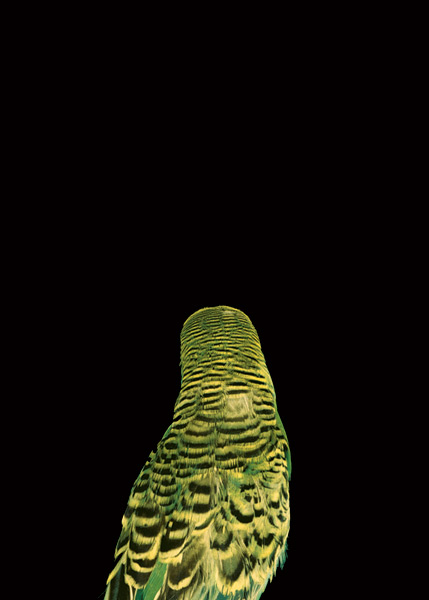 2003, Lynne Roberts Goodwind, Bad Bird9.jpg