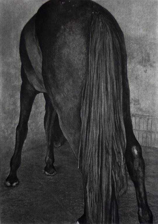 2008, Tiong Ang, A Horse Ass.jpg