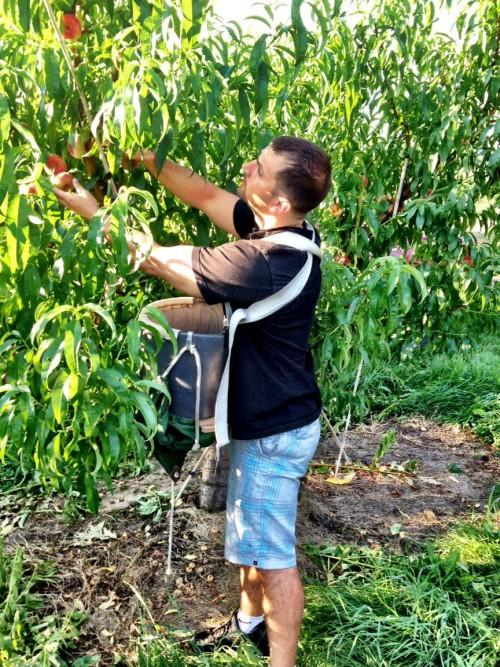 Brian-picking-donut-peaches-e1450882241584.jpg