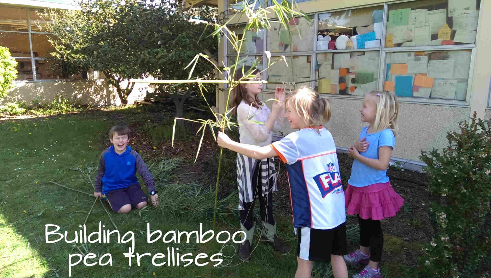 bamboo pea trellis