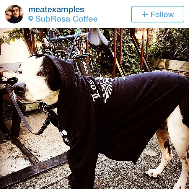 re-gram from @meatexamples. perfect use for X hoodie 😎 we'll be in San Jose on Jan 31. Until then come see John Doe check @theejohndoe or theejohndoe.com #pitbullmix #wetdog #rocknroll #punkrock
