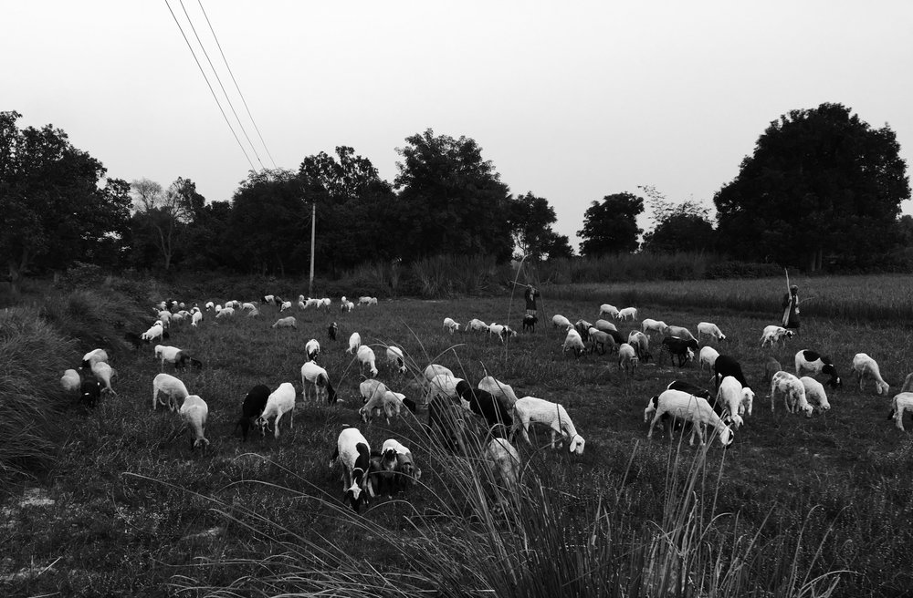 An open field for tending sheep - heading home before sun goes down...