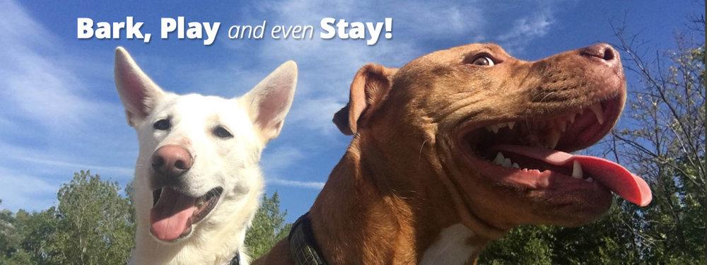 Dog-Daycare-Rochester-NY-boarding-banner3-.jpg