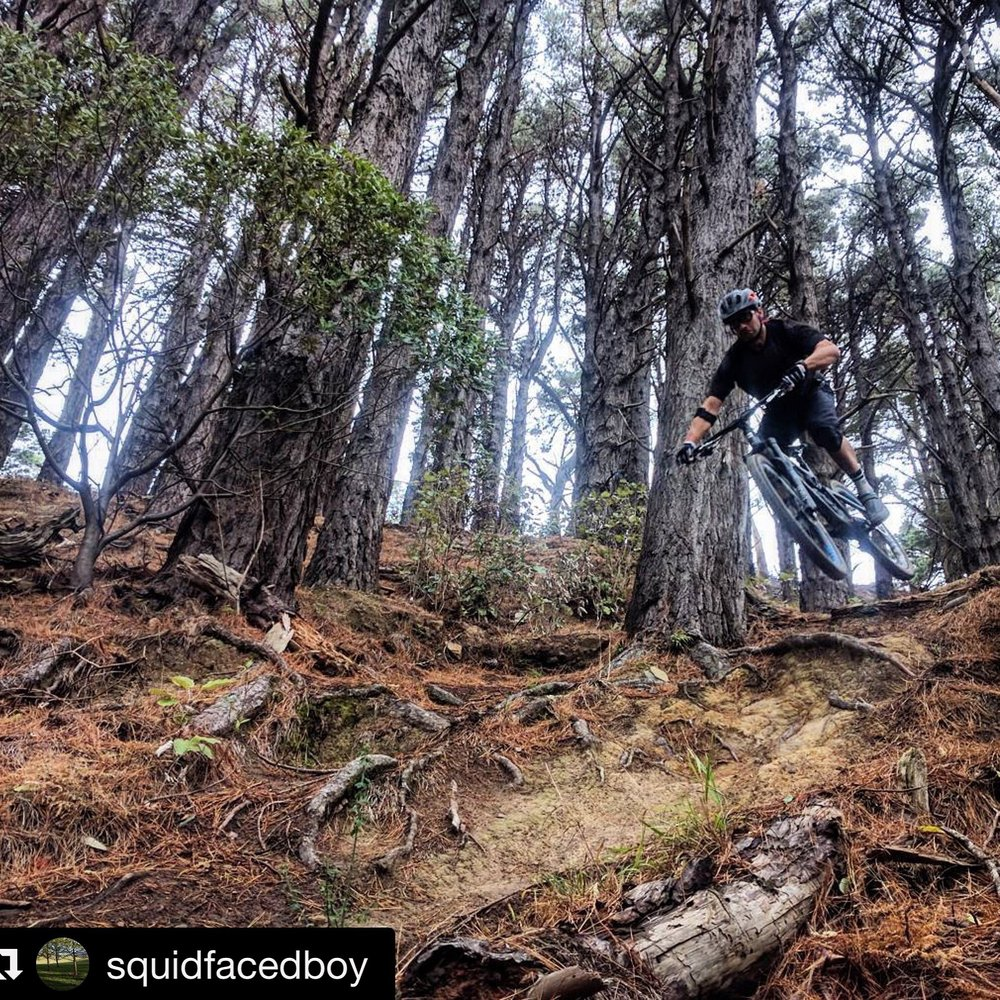This trail used to be illegal until we fought in the trenches for it. V-trail, Mt. Vic.                           rider : yours truly      photo : A boy with a face like a squid.