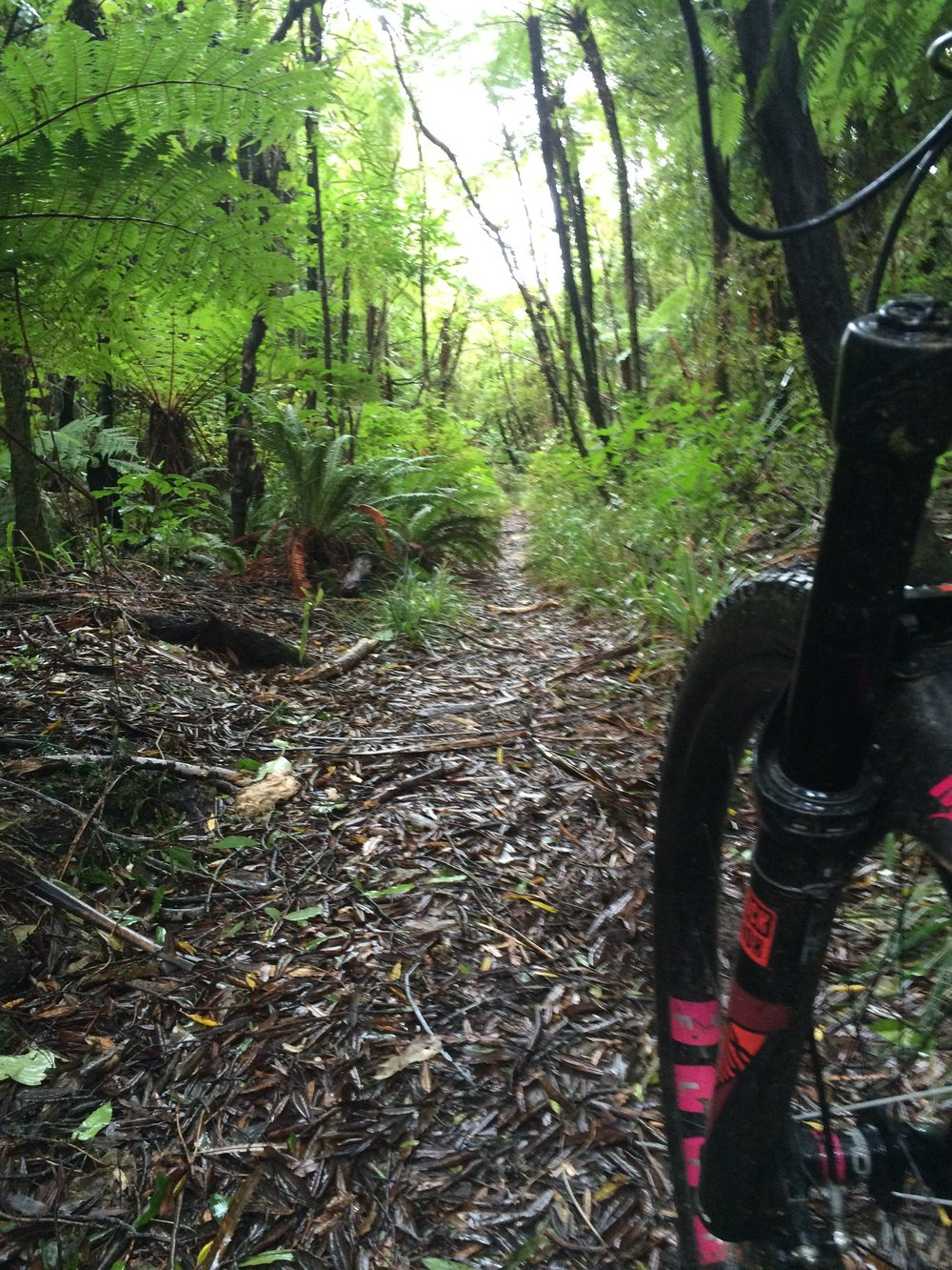 So much native singletrack. I wasn't missing berms and jumps one little bit.