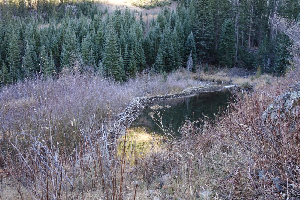 Beaver dam. Wicked.