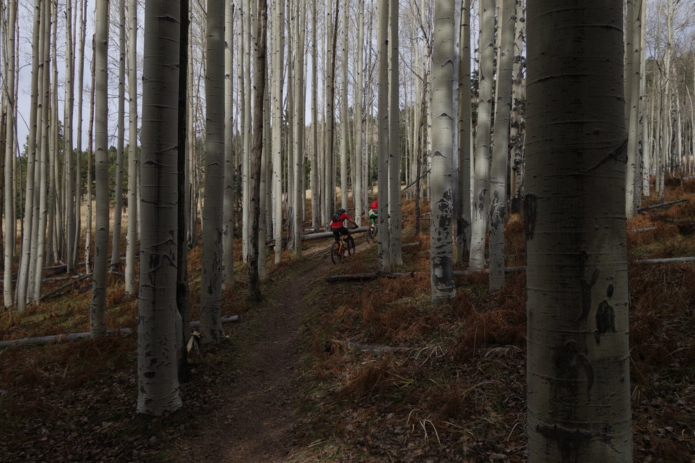 Aspen, meadows, smooth trails. Bliss. A good time to bring the carbon 29er rigid out of the shed.