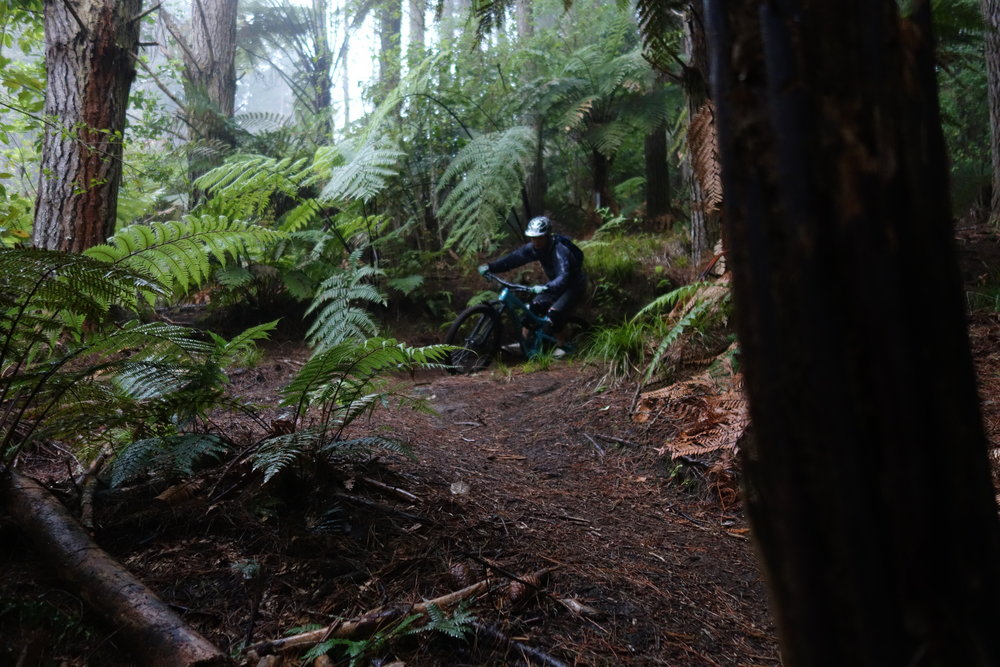 Aaron kept getting us lost in random jungle singletrack. Awesome.