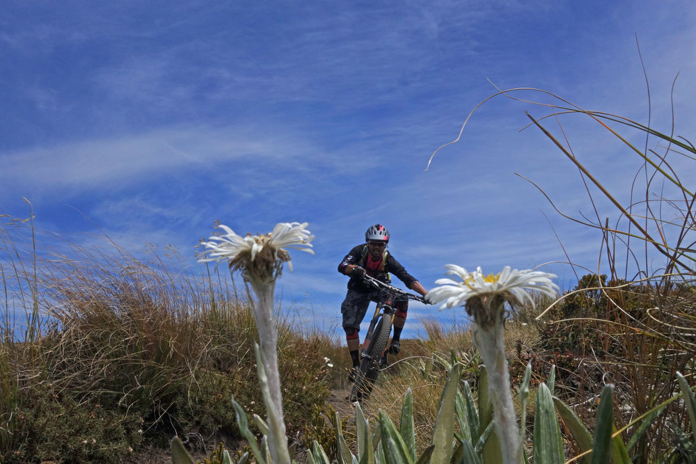 Giant Daisies grew out of the tussock with Jeff sprinting out of a corner.