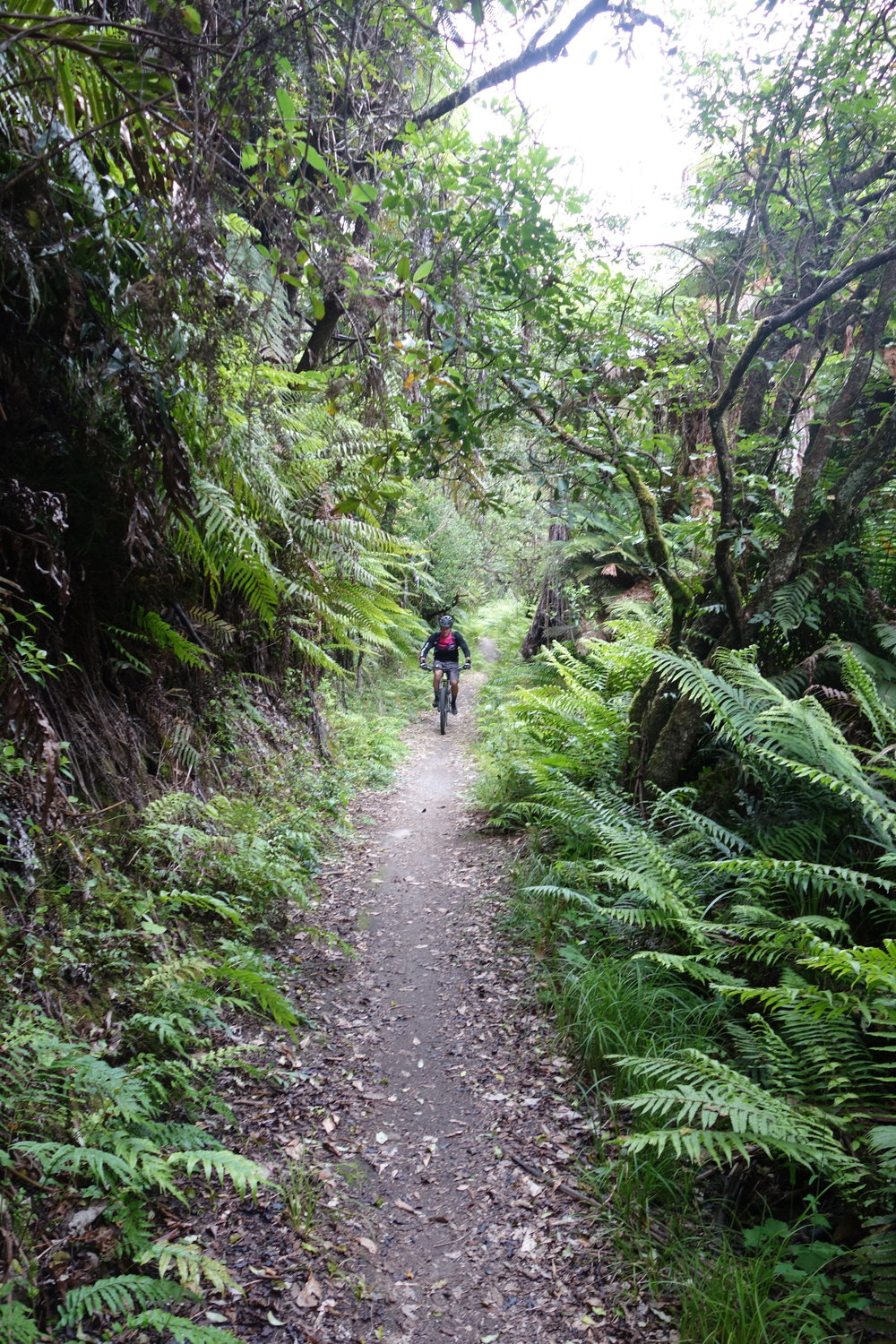 Jim leading the climb out of Kawakawa bay.