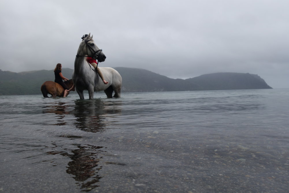 The horses were loving the water. It must be the weightlessness.