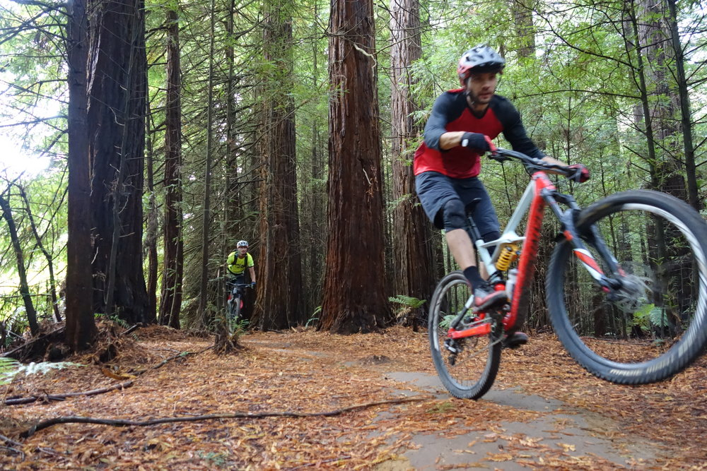 French pinner Damien Escalier casually cruising out of the redwoods and back to town for lunch.