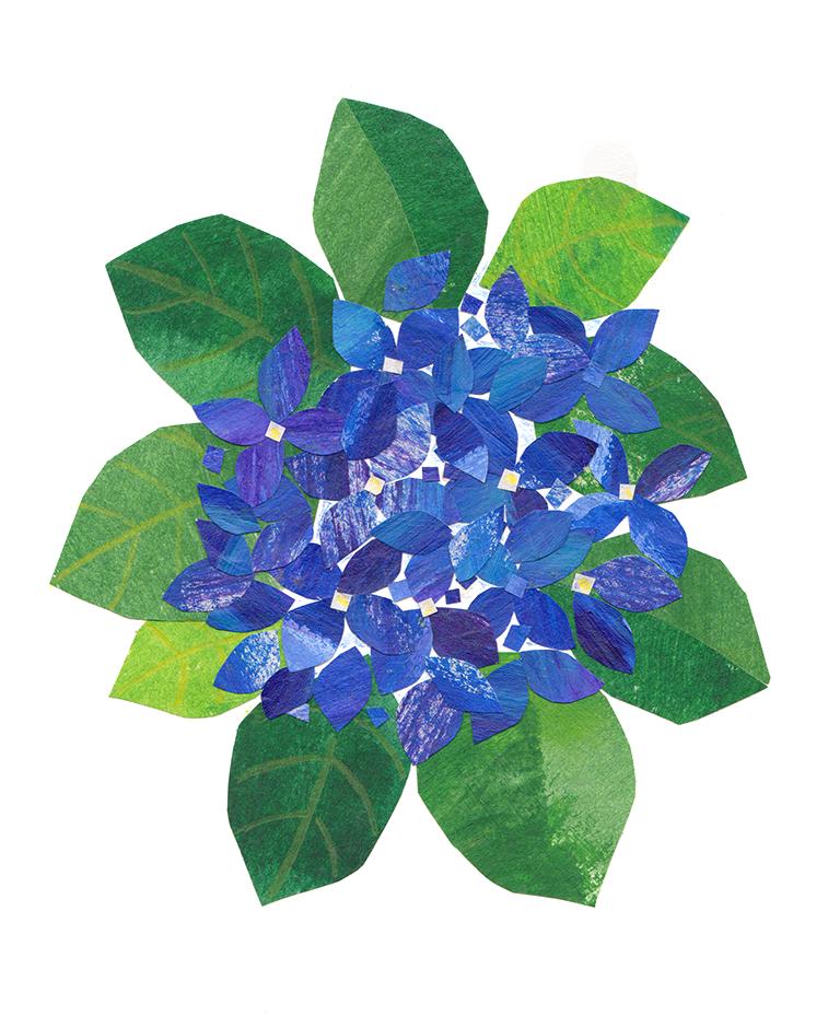hydrangea1.png