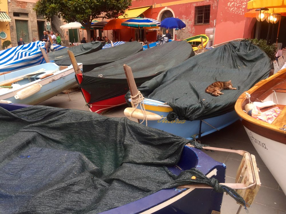 Piazza Marconi is the main square of Vernazza and where you can find cats taking a little nap.