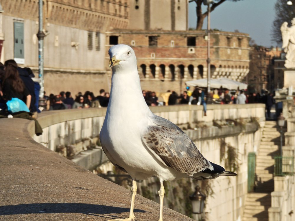 Funny, little seagull posing for a photo