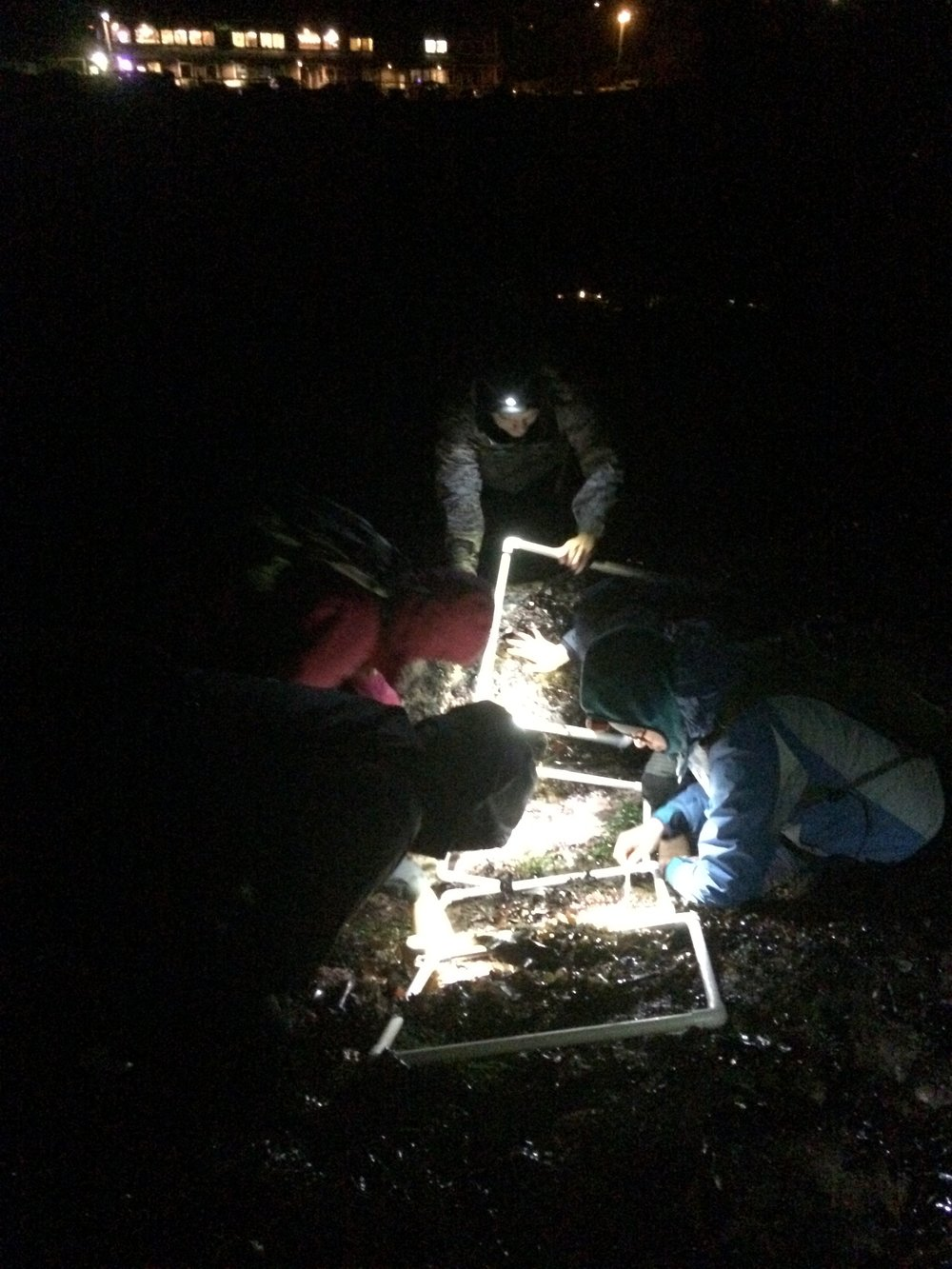 And even in the darkest night, the Dawson lab was recording sea star counts in the tidepools. Check out the UCCGC Ochre sea star project here < https://ucconservationgenomics.eeb.ucla.edu/projects/ochre-seastar/ >