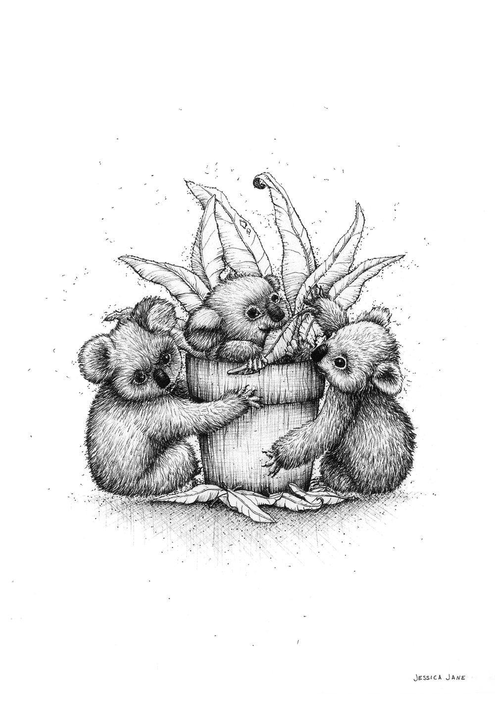 HUNGRY KOALAS