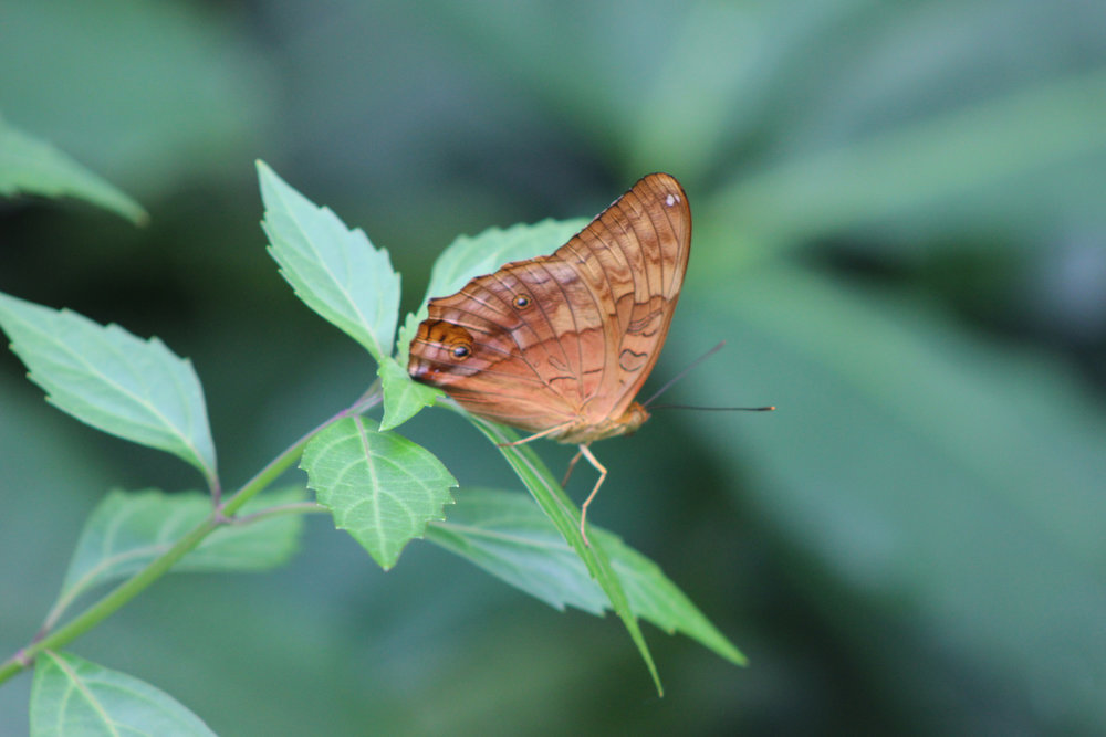 Butterfly2_MelbZoo18_JessicaJaneRule copy.jpg