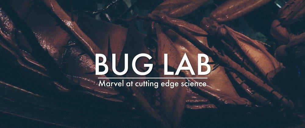 buglab2.jpg