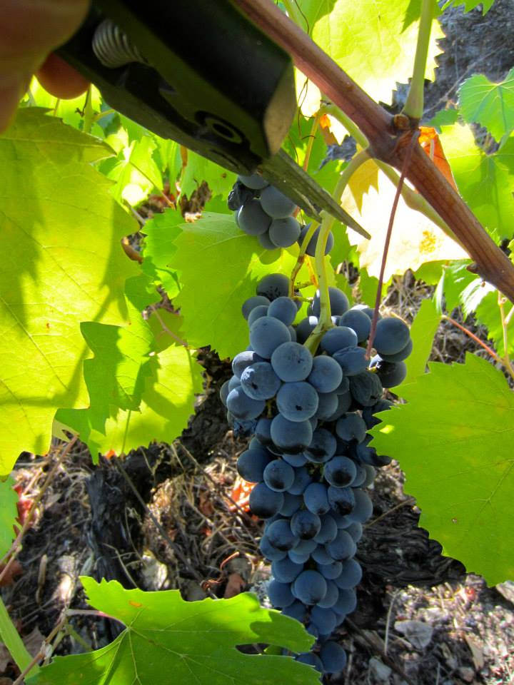 Indigenous grapes of excellent quality, at Quinta do Tedo ours are grown according to strict organic guidelines….
