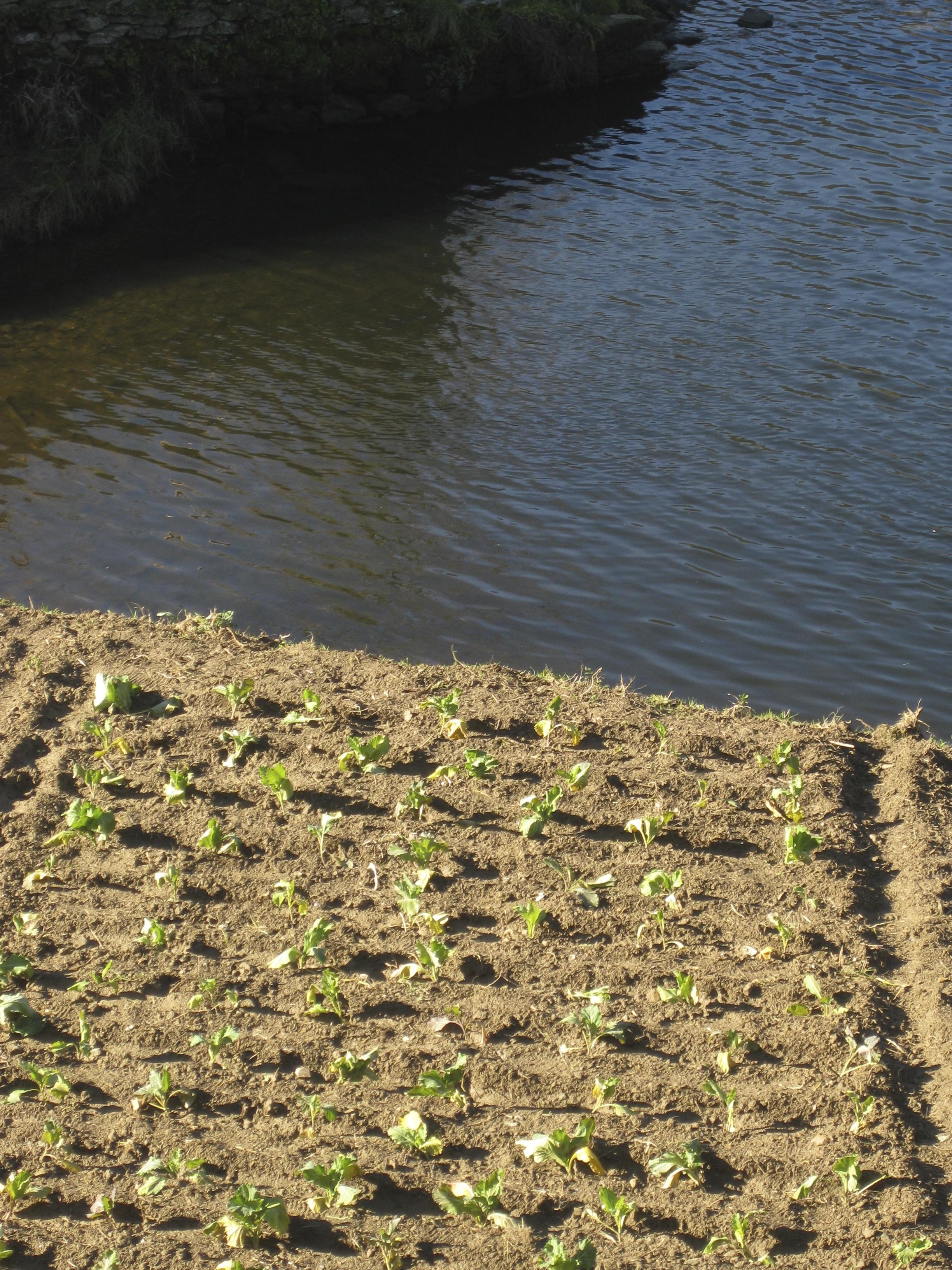 Nous trouvons toujours encore un autre endroit pour planter les choux !