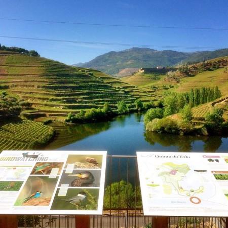 Point de vue sur le sentier nature de Quinta do Tedo.