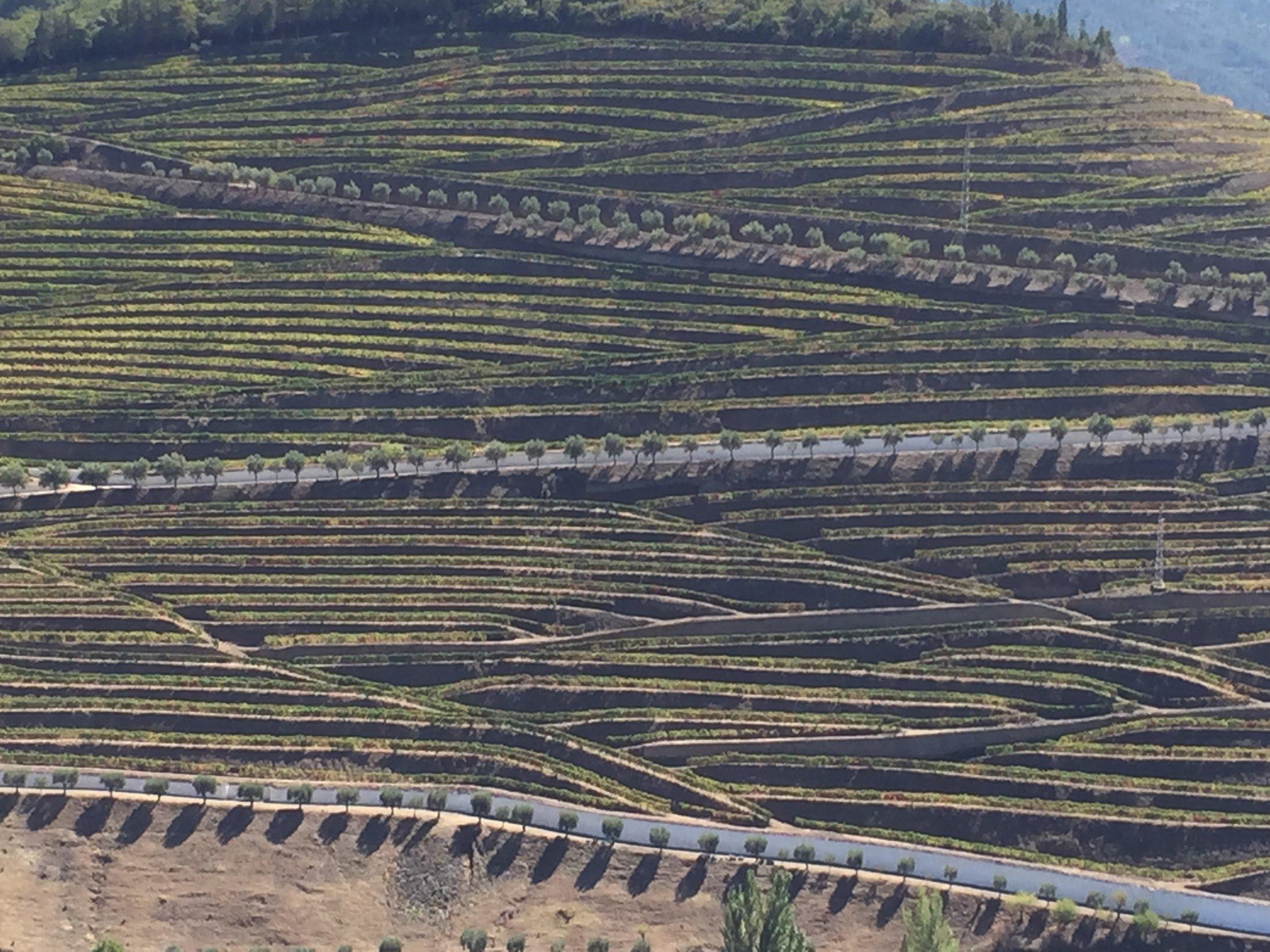 la mosaïque de vignobles, des oliviers et des sentiers.