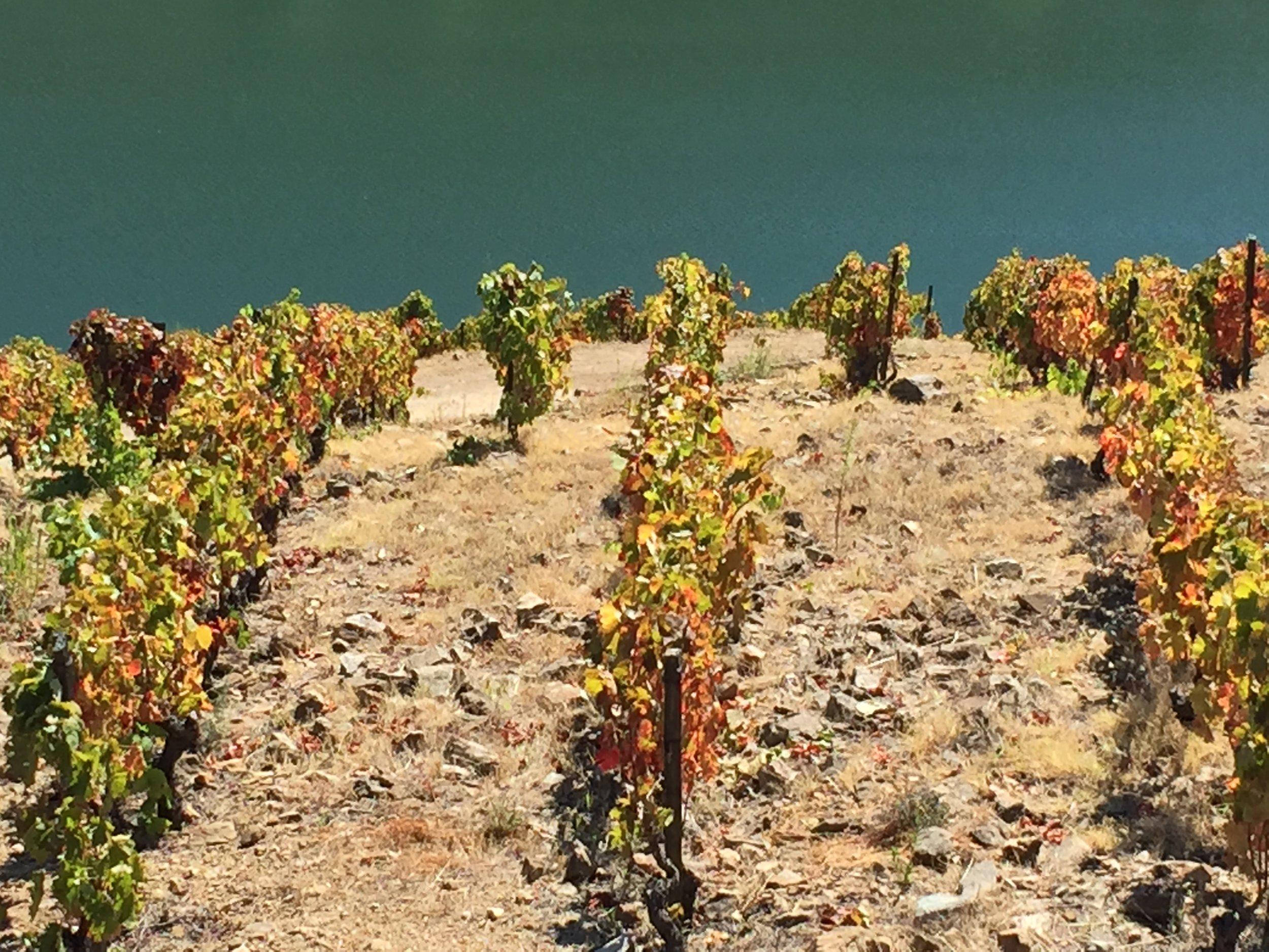 Le vignoble rencontre le Douro