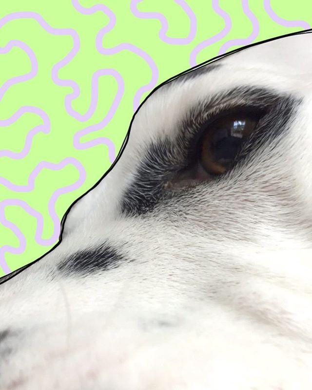 Close up kitty 🐼