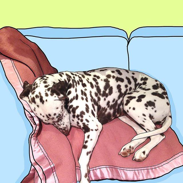 Bella having a well earned rest 😴