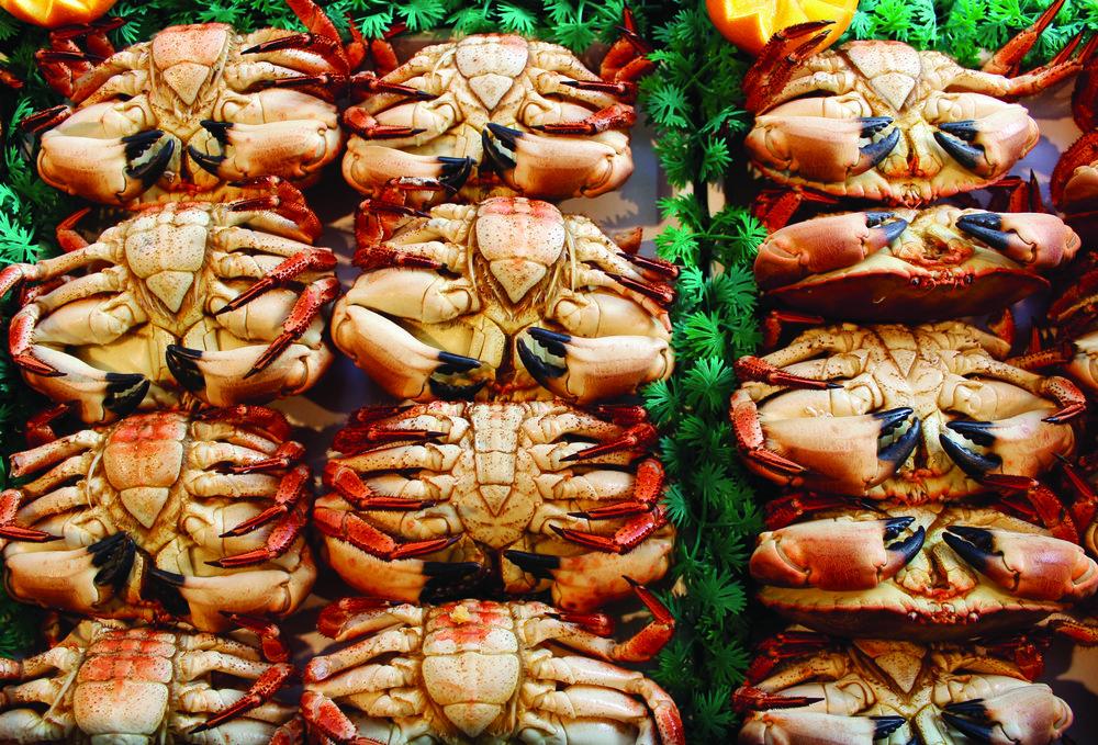 Crabs 9127.jpeg