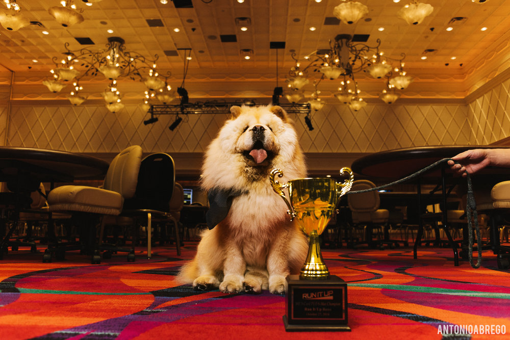 Chewy Wanted Some Trophy Time