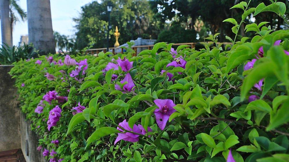 Benjakitti_Park_Bangkok_flowers.jpg