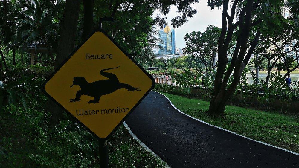 Benjakitti_Park_Bangkok_Water_Monitor_Lizard.jpg