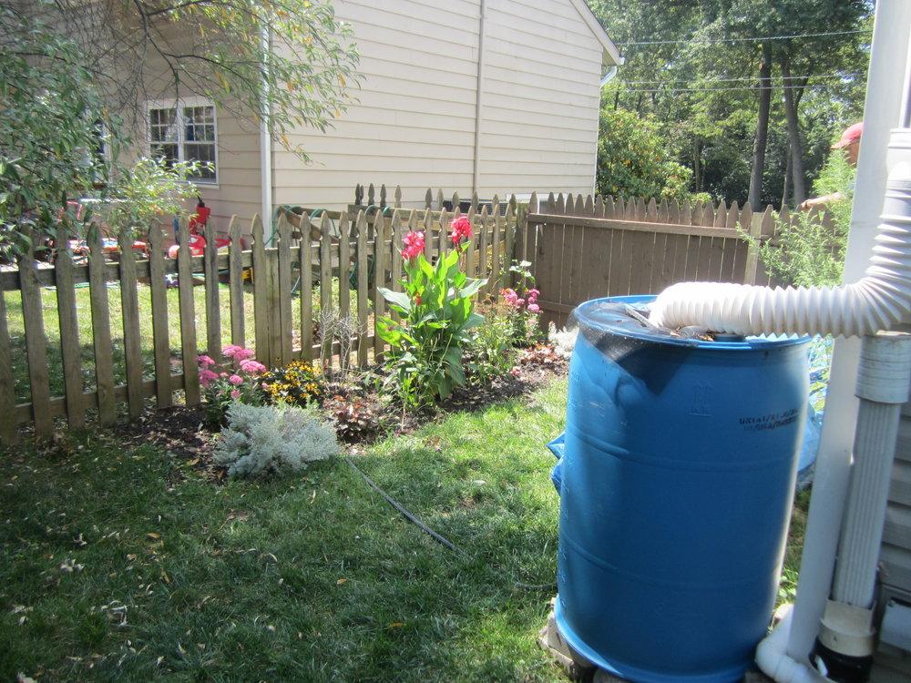 Install your own rain garden!