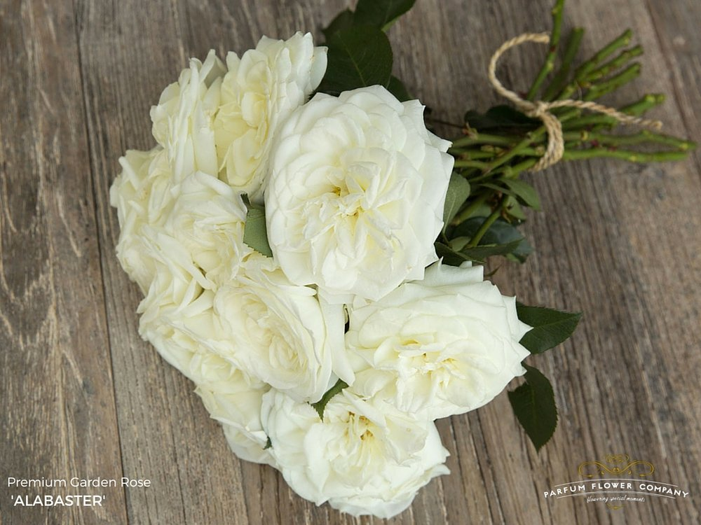 01 Rose Garden Alabaster.jpg