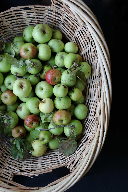 Wild apples 2017.jpg