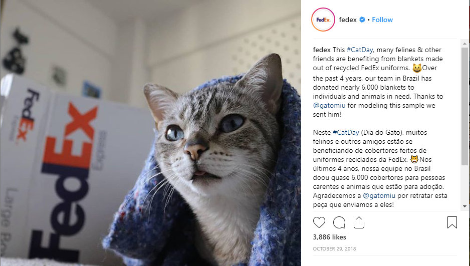 FedEx B2B on Instagram with cat
