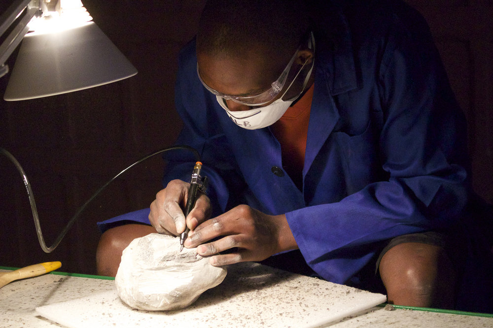 Albano Nhassengo preparing a fossil at Laboratory of Paleontology (Mozambique).