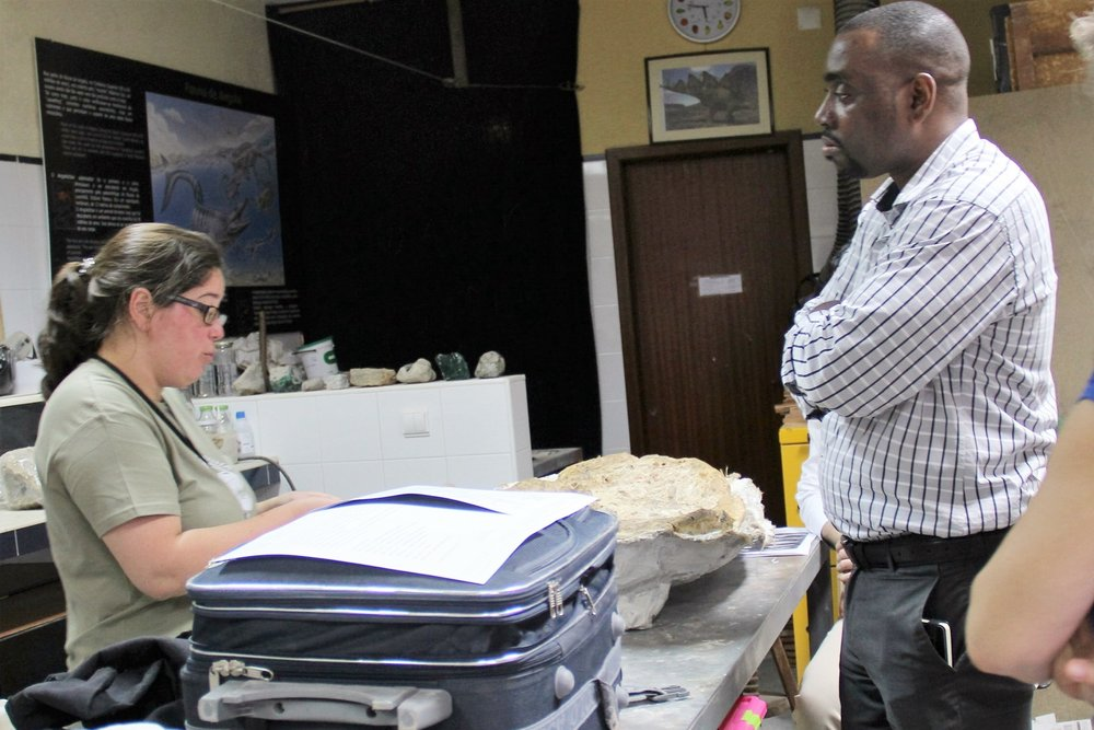 Preparing the fossils at Lourinhã Museum for returning to Mozambique.