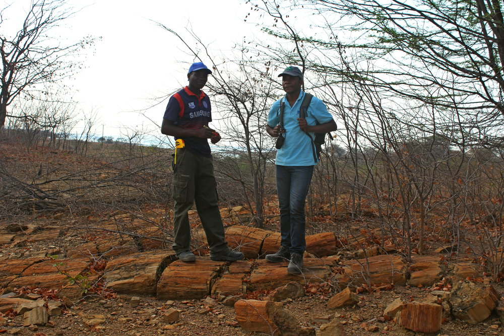 Neva Djimo (left) and Nelson Nhamutole (right) conducting a paleobotanical survey in one of the largest fossil forests in the world.