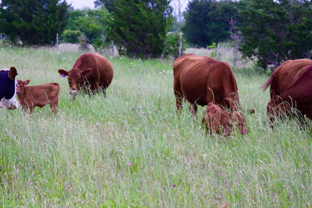 Jolie Vue Farms - Grass fed beef in Houston.