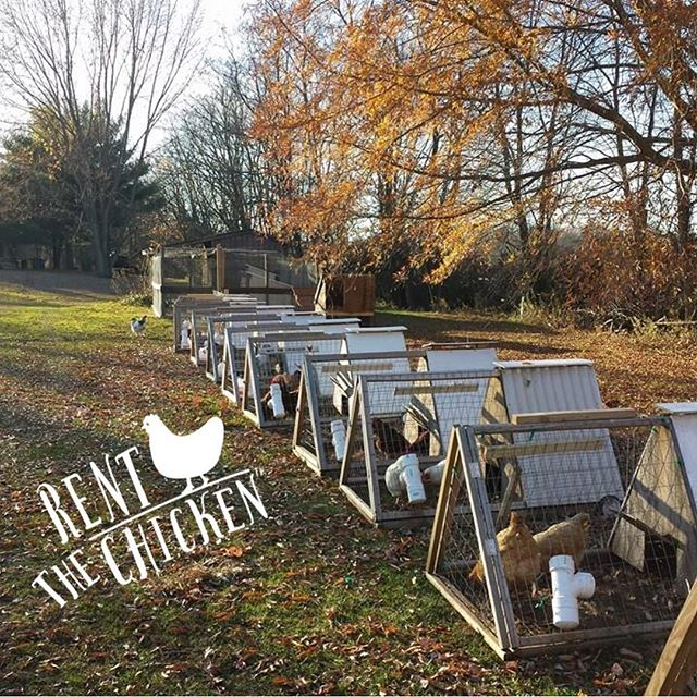 Jolie Vue Farms partners with Rent the Chicken.