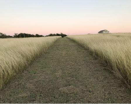 Jolie Vue Farms - Wild Texas grass