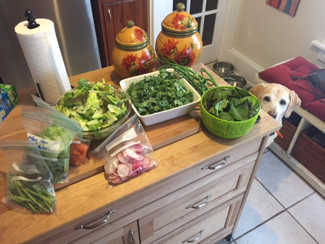 csa everything prepped for the week.JPG