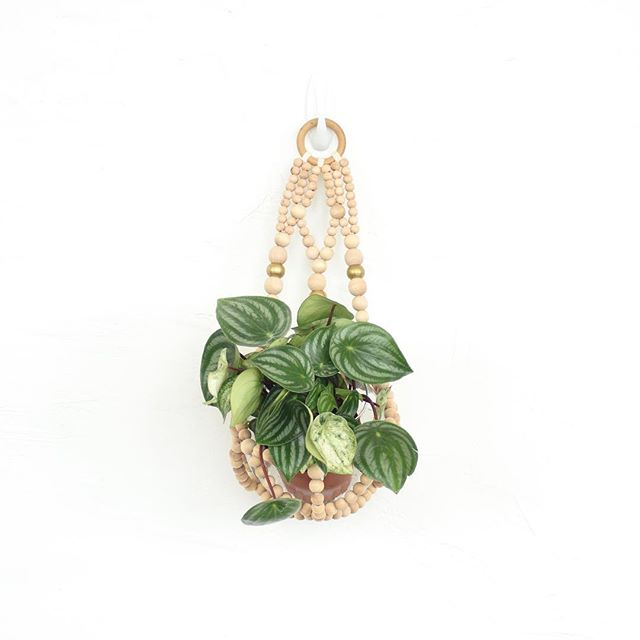 Brass + Wood Wall Planter with the cutest watermelon peperomia 🍉🍉🍉