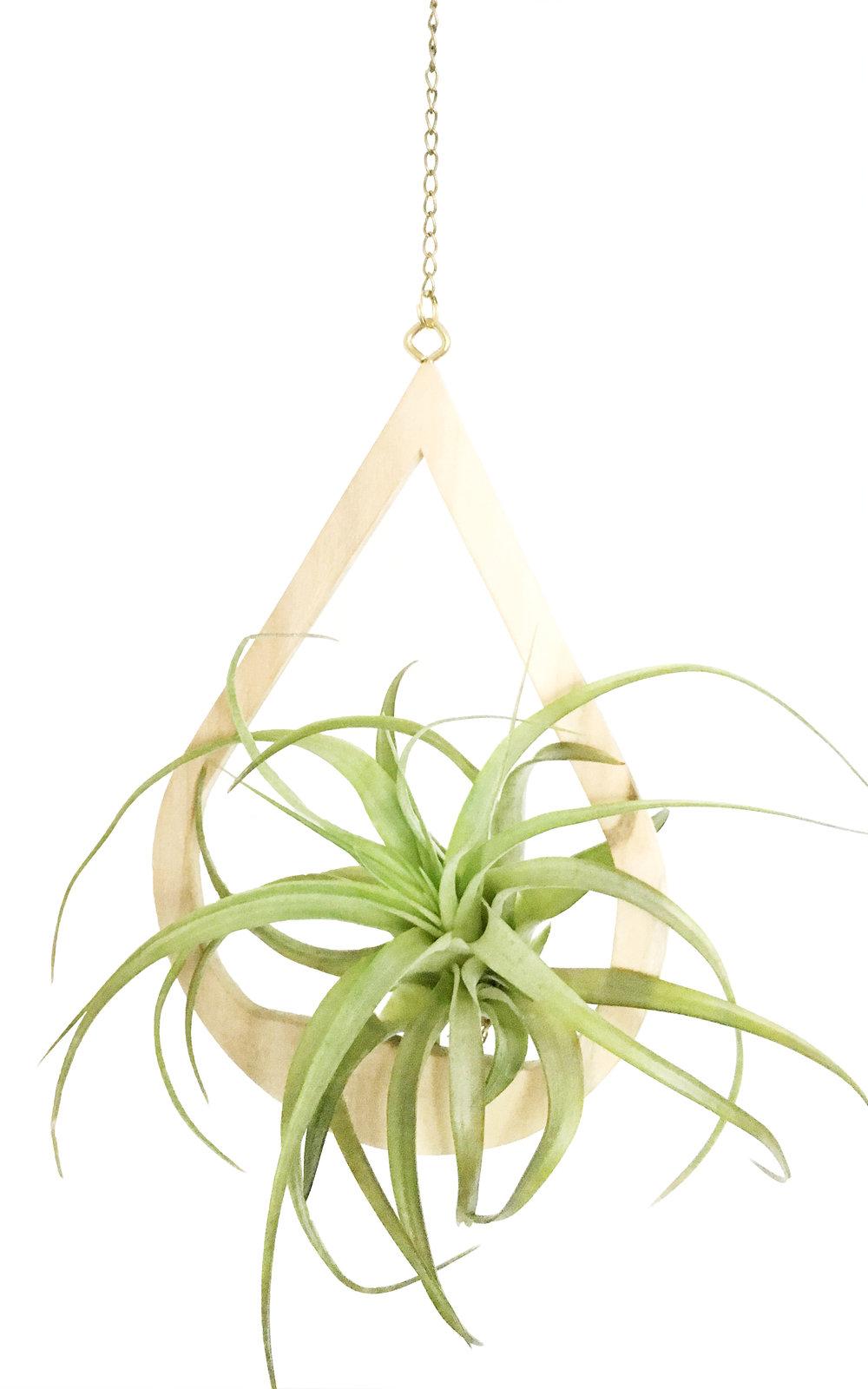 Poplar Drop Hanger