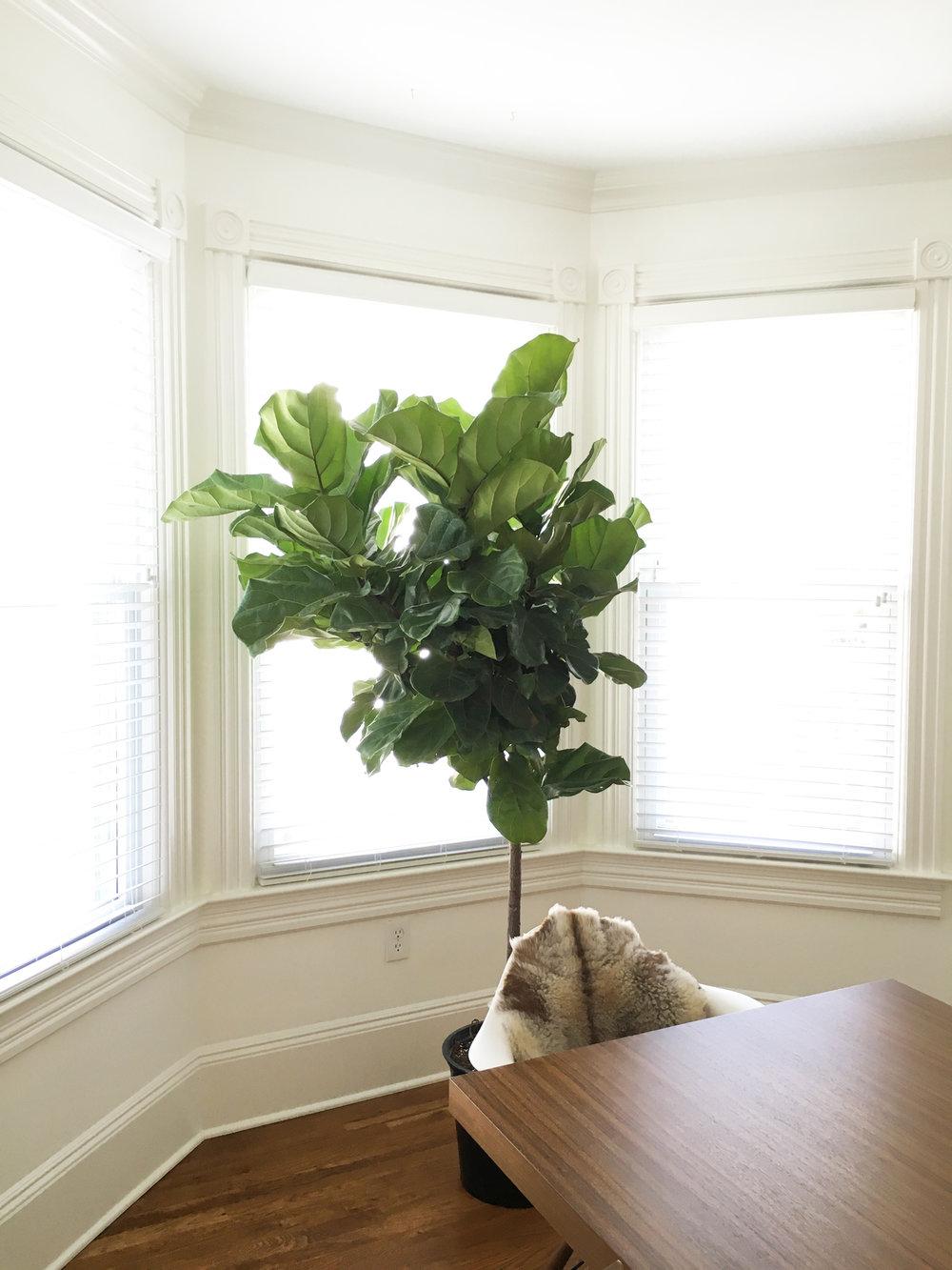 Asbury Park Residence | Dining room