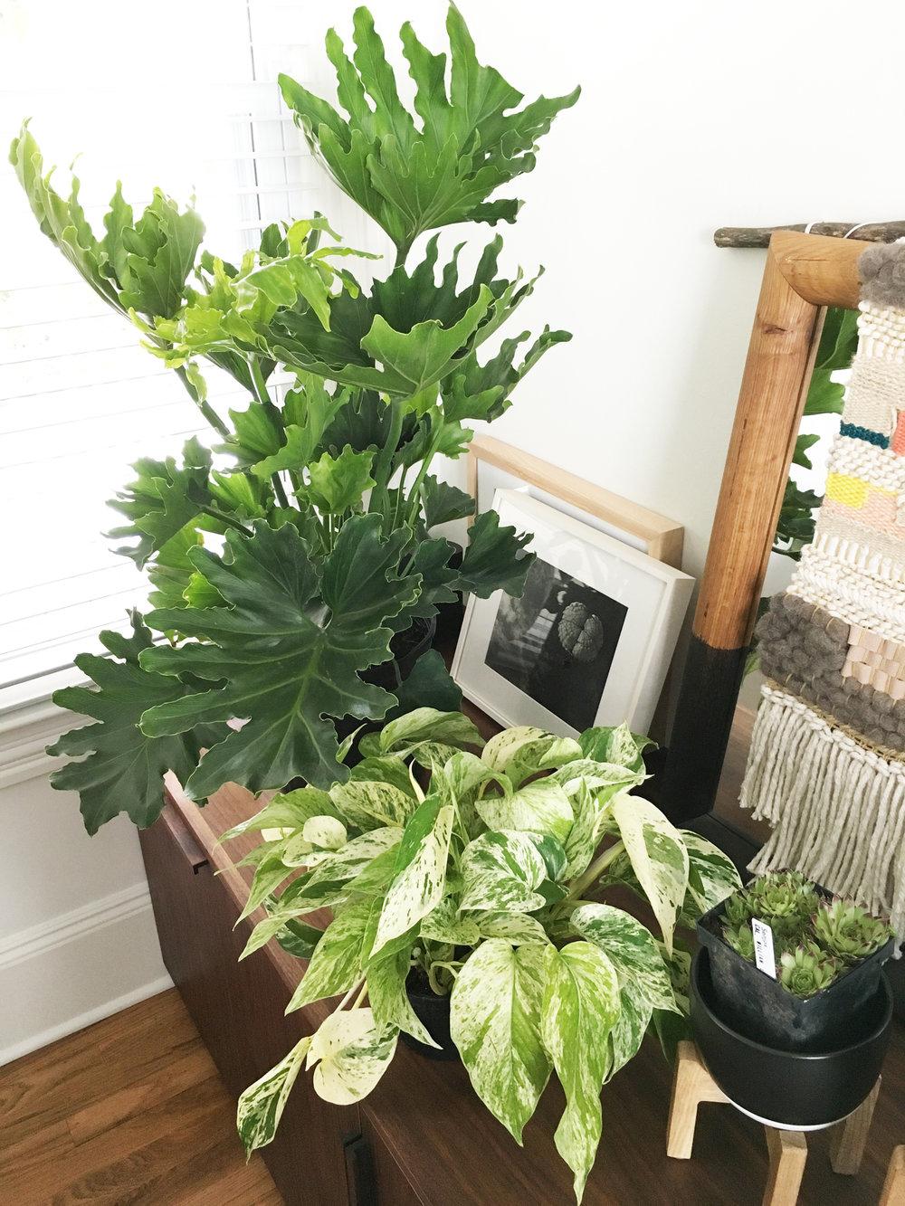 Asbury Park Residence | Living room