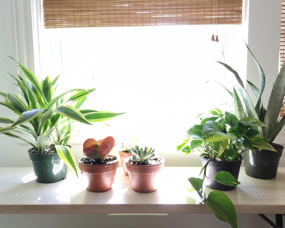 Asbury Park Residence | Kitchen